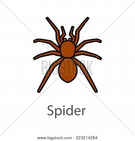 Spider color icon. Arachnida. Isolated vector illustration