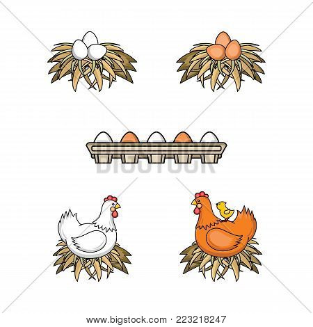 Vector flat poultry farm chicken set. Brown, white hen chickens, eggs in hay nest, at cardboard box, yellow small chick sitting at chicken. Isolated illustration, white background. Organic food design