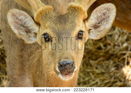 closeup photo of cute rein deer face
