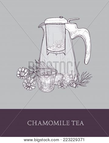 Glass teapot or pitcher with strainer, cup of tea or herbal infusion and chamomile flowers hand drawn in vintage style. Tasty natural infused beverage. Monochrome vector illustration for label, tag