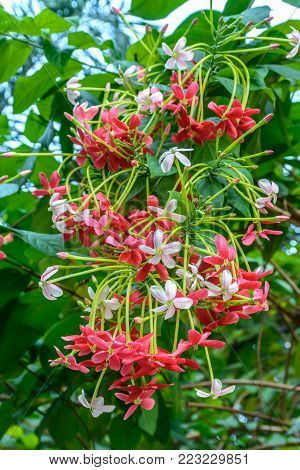 photo of colorful honey suckle flowers bunch