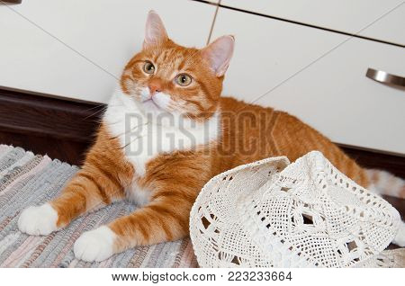 red funny cat with big white carnival hat