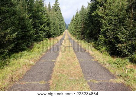 Long straight path through the spruce forest