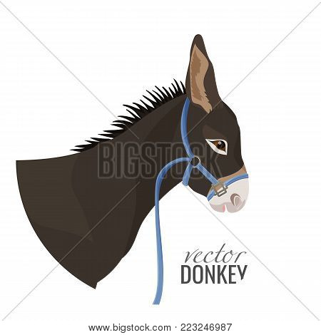 Adorable donkey head with black mane in blue thin harness isolated cartoon flat vector illustration on white background. Animal that can carry heavy weight.