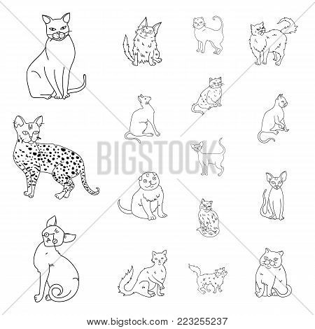 Breeds of cats outline icons in set collection for design. Pet cat vector symbol stock  illustration.