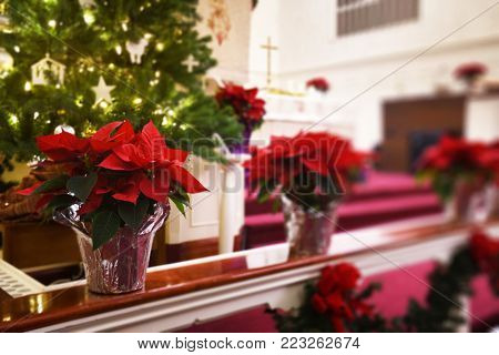 Poinsettias decorate railing in front of church alter and Christmas tree