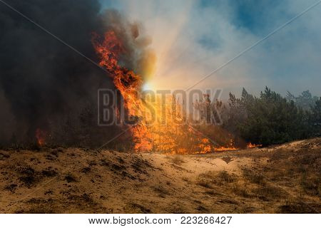fire. wildfire at sunset, burning pine forest in the smoke and flames