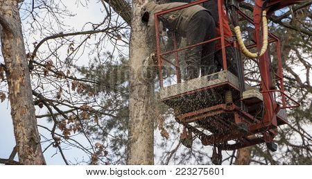 Autotower, elimination of emergency trees. Workers on parts to eliminate dry pine. close-up
