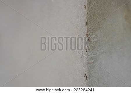 Group Of Ants Walking Up The Corner Of Gray Wall