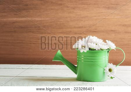 Watering can full of daisies - Springtime image with a small green watering can full of white delicate daisies, on a table and a wooden wall, on a sunny day.