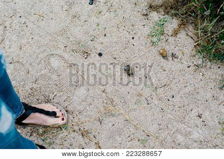 Female feet on the sand in overcast weather and couple of snails crawling along