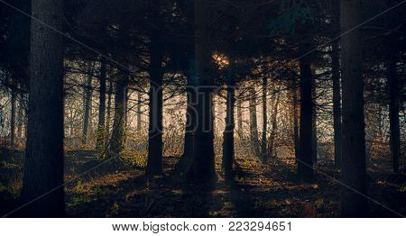 Foggy dark forest with a black shadows close up.