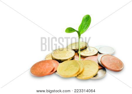 Jewish charity concept. Tzedakah, translated like charity. A photo of money, heap of euro coins and a small green sprout growing from the coins. Business finance concept. Coins isolated on white