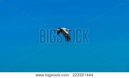 Beautiful Stork With Red Nib Flying In The Blue Sky