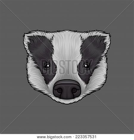 Head of badger, portrait of wild animal hand drawn vector Illustration on a grey background