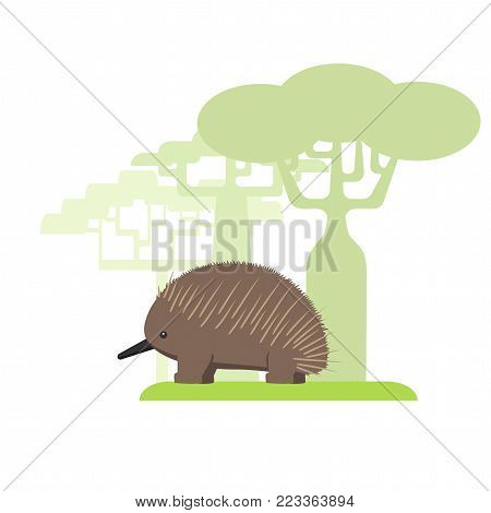 echidna Australian animal, color flat image on white background