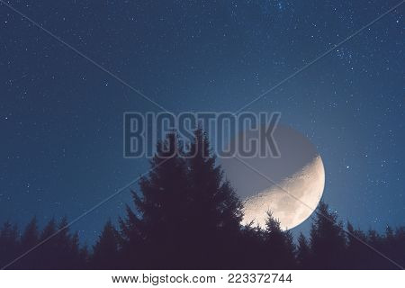 Half Moon With Milky Way Stars And Tree Silhouettes.