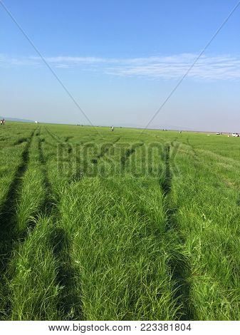 The river dried up in winter, and green grass grew in the riverbed.Form a sea of grass,very beauty