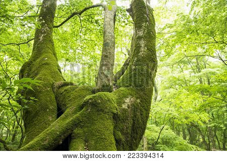 Green mossy tree trunk in fresh green native forest