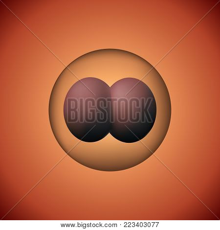 Two zygote vector illustration. 3D image of experimental insemination. Cycle of scientific embryology.