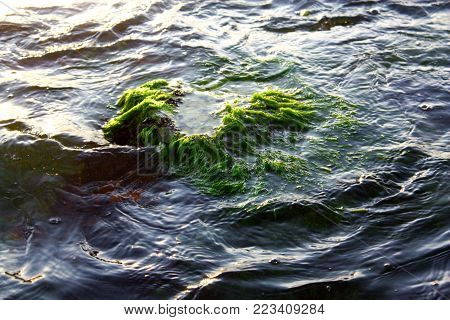 Partially submerged algae and seaweed covered rocky outcropping