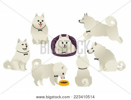 Set of cute fluffy dog eating, sitting, lying and playing, front, side and rear view, flat cartoon vector illustration isolated on white background. White fluffy dog, puppy playing, sitting and eating