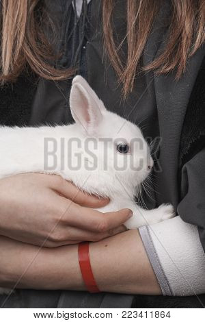 A white rabbit in a girl's arms