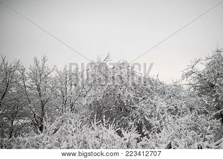 Snow on trees on grey sky background. Temperature, freezing, cold snap, snowfall. Winter nature concept. Christmas, xmas, new year holidays celebration, copy space