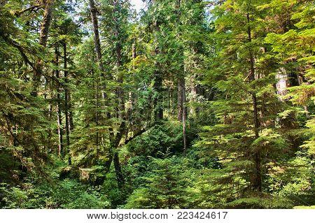 Canadian Rainforest in Pacific Rim National Park near Tofino, BC, Canada