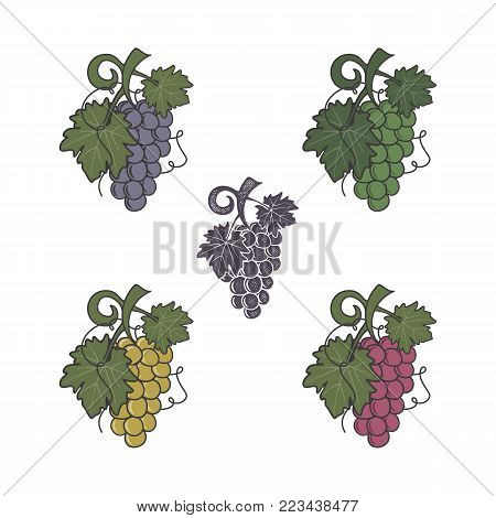Set of grapes icon. Different colors and style. Flat, retro letterpress effect. Friut symbol for logo, label or badge. Stock vector illustration isolated on white background.