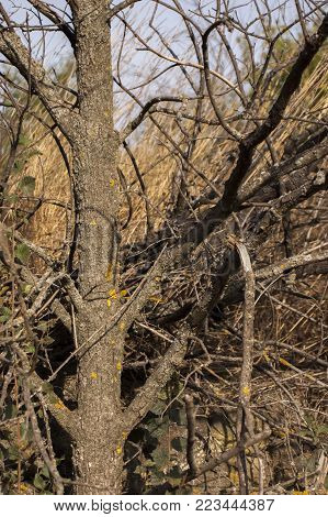 Closeup of gnarled tree without leaves,lighten by sunset