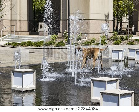 A pet dog cooling off in a water fountain.