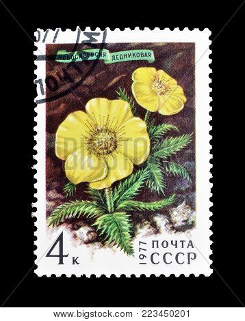 SOVIET UNION - CIRCA 1977 : Cancelled postage stamp printed by Soviet Union, that shows Novosieversia glacialis.