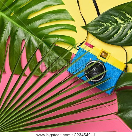 Tropical Palm Green Leaves Background. Colorful Hot Summer Vibes. Fashion concept. Trendy fashion Retro Design camera. Minimal