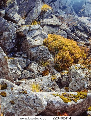 Rocks with plants in the Carpathian mountains. Nature textures, eagerness to life