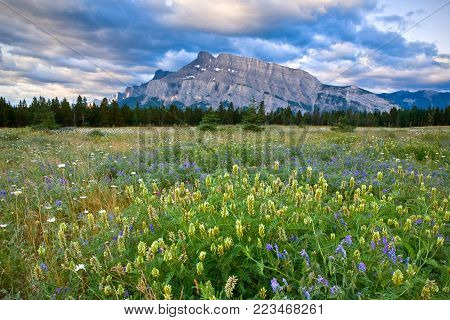 Mount Rundle and wild flowers, Banff National Park, Alberta, Canada