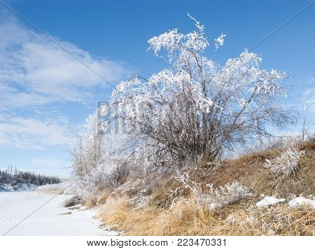 Hoar-frost covered trees in winter on a cold winter day.