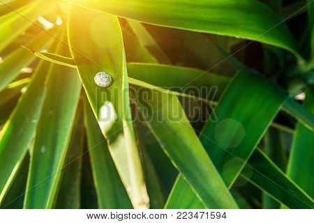 Little Snail Sitting on Long Narrow Spiky Interwoven Palm Tree Leaves. Golden Sunlight Flare. Tropical Foliage Pattern. Poster Banner Template Background. Exotic Vacation Tourism Wanderlust Concept
