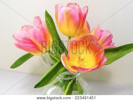 Bright pink and yellow tulips in a glass vase standout against a white background.