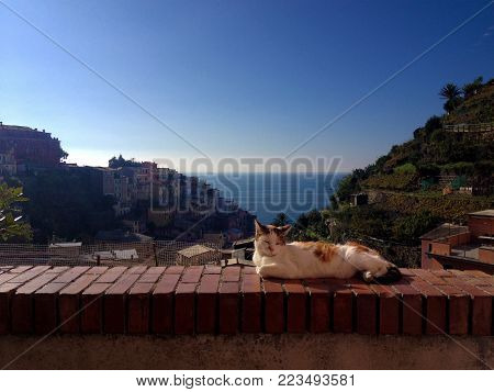 The image portrays the tranquility of a cat lying on a wall at sunset in the streets of a small town in Italy by the sea.