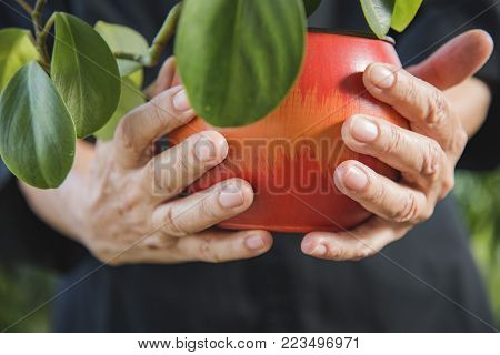 Old woman watering plants at her home, expressing gardener's love
