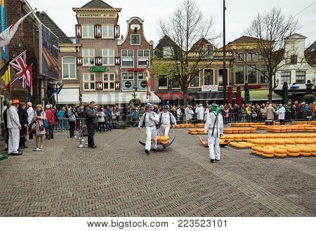 ALKMAAR,  NETHERLANDS - APRIL 21, 2017:  Carriers walking with many cheeses in the famous Dutch cheese market in Alkmaar, The Netherlands. The event happens in the Waagplein square.