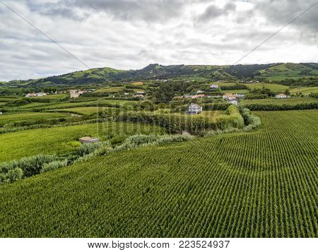Aerial view of Cornfields outside of the town of Ginetes on Sao Miguel Island in Portugal.