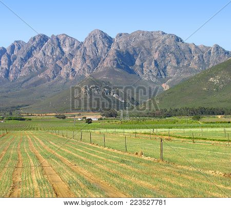 LANDSCAPE WITH GREEN FIELDS IN THE FORE GROUND AND MOUNTAINS IN THE BACK GROUND