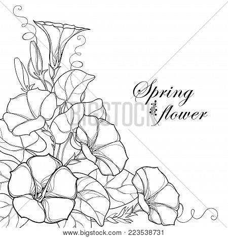 Vector corner bouquet with outline Ipomoea or Morning glory flower, leaf and bud in black isolated on white background. Perennial climbing plant in contour style for summer design and coloring book.
