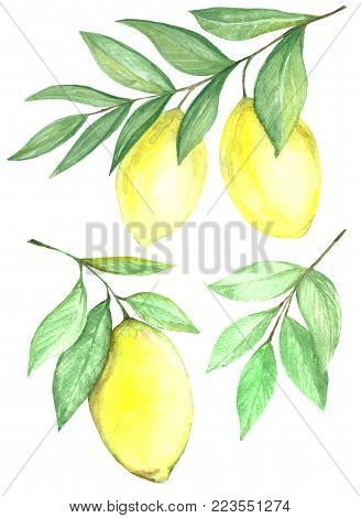 Lemon Collection