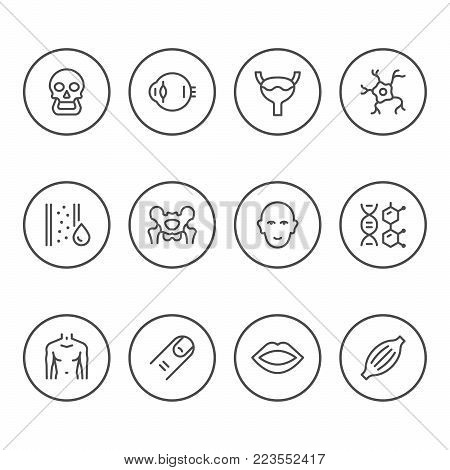 Set round line icons of human organs isolated on white. Vector illustration