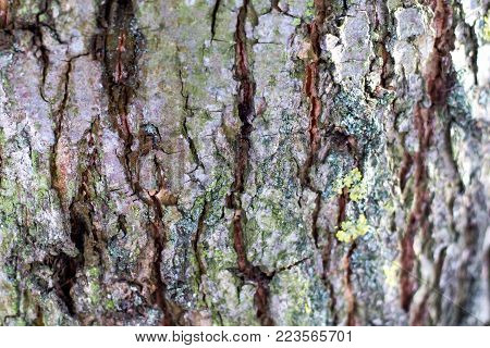 structure of the bark of a tree with cracks and convolutions