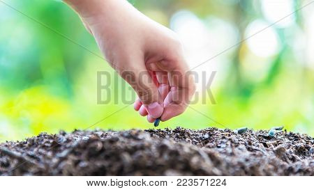 Close up of a woman planting hands.Farmer's hand planting a seed in soil