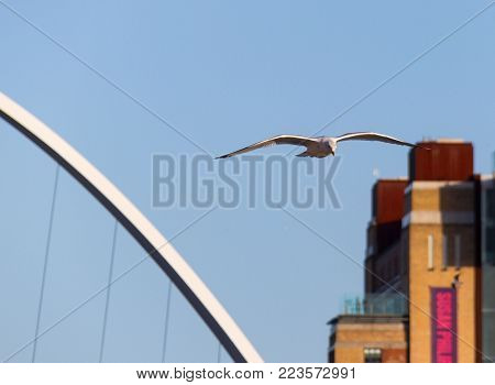 Seagull Flying Over River Tyne In Newcastle Quayside